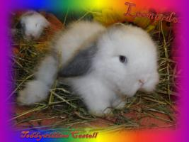Foto 2 Süsse Teddywidder Babys