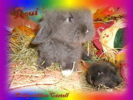 Foto 4 Süsse Teddywidder Babys