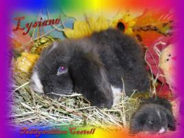 Foto 6 Süsse Teddywidder Babys