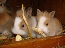 Foto 3 Süße kleine Knutschkugeln dürfen nun ausziehen!