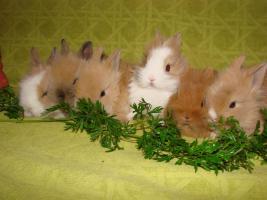 Foto 4 Süße kleine Knutschkugeln dürfen nun ausziehen!