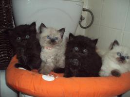 Foto 3 Süße schmuser suchen bald Liebevolles Zuhause!!!