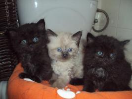 Foto 5 Süße schmuser suchen bald Liebevolles Zuhause!!!