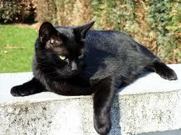 Foto 3 Süße, schwarze Katzendame