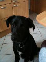 Süßer Hund sucht dringend ein neues zu Hause!