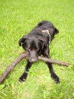 Foto 2 Süßer Hund sucht dringend ein neues zu Hause!