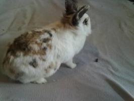 S��es Kaninchen mit K�fig zu verkaufen