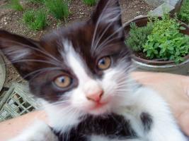 Süßes Katzenmäderl