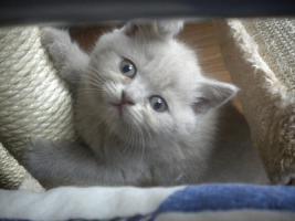 Foto 5 Super s��e Kitten