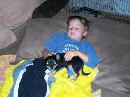 Foto 2 Super süßer Chihuahua!!!!