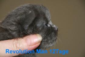 Foto 5 Super typvolle Maine Coon Kitten