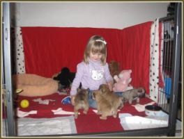 Foto 4 Supersch�ne Franz�sische Bulldoggen Welpen