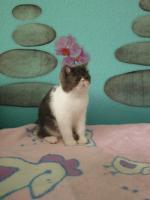 Foto 5 Sußes Mädchen  (Exotic Shorthair)