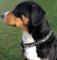 Swarovski-Hundehalsband