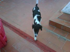 Foto 5 TALO - ein Wirbelwind, der auch Katzen toleriert