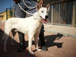 TAMINO – sucht seinen Wegbegleiter  (Tierschutzhund)