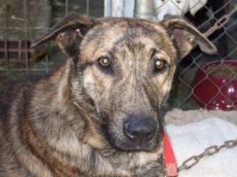 Foto 3 TIGRA – sie hat noch ihr ganzes Leben vor sich (Tierschutzhund)