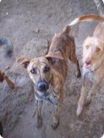 Foto 8 TIGRA – sie hat noch ihr ganzes Leben vor sich (Tierschutzhund)