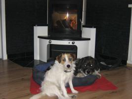 Tagesbetreuung f�r meine 2 Hunde gesucht