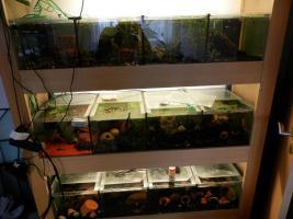 Tausche oder Verkaufe Aquarienanlage…