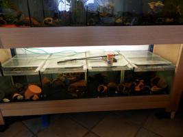 Foto 2 Tausche oder Verkaufe Aquarienanlage�