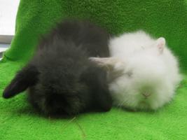 Teddywidder Osterhasen Kaninchen