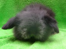 Foto 3 Teddywidder Osterhasen Kaninchen