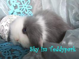 Teddywidder suchen ein schönes Zuhause, nur Gruppenhaltung + Freilauf