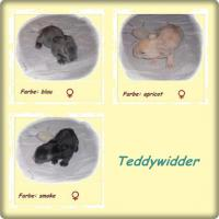 Foto 2 Teddyzwerge und Teddywidder können reserviert werden