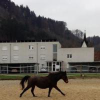 Temperamentvolles Pony wegen Studium zu verschenken