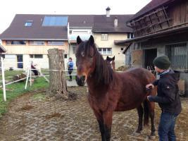 Foto 2 Temperamentvolles Pony wegen Studium zu verschenken