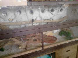 Terrarium mit 5 Bartagamen