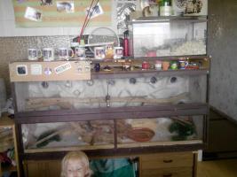 Foto 2 Terrarium mit 5 Bartagamen