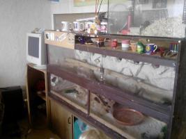Foto 3 Terrarium mit 5 Bartagamen