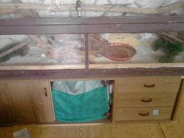 Foto 4 Terrarium mit 5 Bartagamen