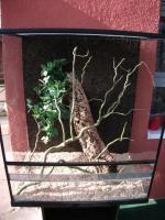 Terrarium Hochterrarium