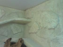 Foto 5 Terrarium Holz 2m x 1m x o,72m
