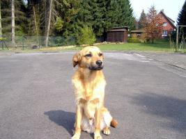 Terrier Mischling sucht dringent ein Zuhause