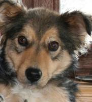 Foto 2 Terriermischling knapp 2 Jahre alt sucht ein neues Heim