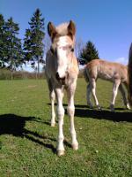 Foto 3 Tessi, Fanny, Vally, .. suchen
