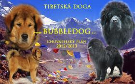 Foto 5 Tibetmastiff, Tibetdogge, Do-Khyi