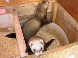 Tierbetreuer / Betreuerin für 14 Tage im Juni 2017 nach Nenzingen gesucht !!