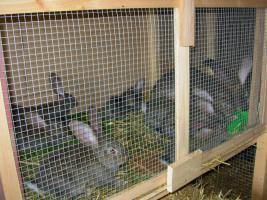 Foto 5 Tierbetreuer / Betreuerin für 14 Tage im Juni 2017 nach Nenzingen gesucht !!