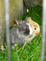 Foto 6 Tierbetreuer / Betreuerin für 14 Tage im Juni 2017 nach Nenzingen gesucht !!