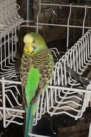 Foto 3 Tierbetreuung