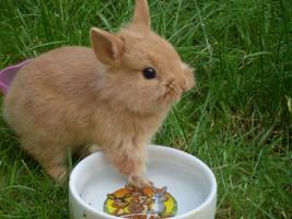 Foto 4 Tierbetreuung