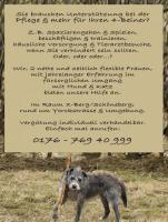 Tierbetreuung - Sie brauchen Unterstützung bei der Pflege & mehr für Ihren 4-Beiner?