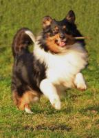 Foto 2 Tierfotografie Ghost Eyed Dogs