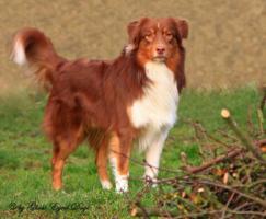 Foto 3 Tierfotografie Ghost Eyed Dogs
