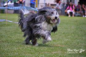 Foto 4 Tierfotografie Ghost Eyed Dogs
